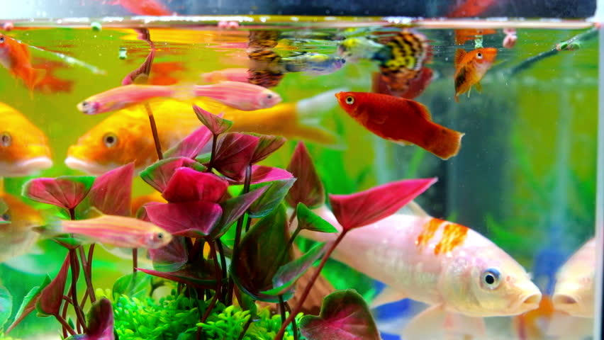 Take care of fishes the right way: 6 easy tips for caring for a pet fish! -